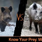Know Your Prey: The Differences between Wild and Feral