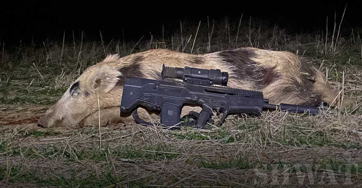 Tavor 7 Hog hunting