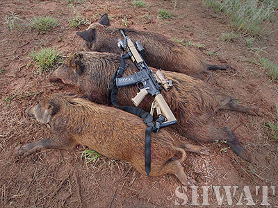 How to Set Up an AR-15 for Hog Hunting